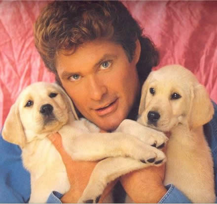 Photo: David Hasselhoff holding two golden retriever puppies.