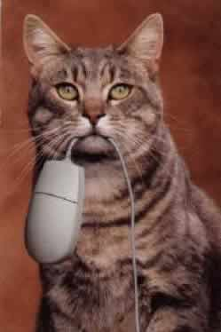 Photo: Tabby cat holding a computer mouse by its cord in its mouth.