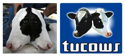 Blinky the two-headed calf, side-by-side with the Tucows logo